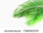 palm leaves isolated on white... | Shutterstock . vector #748982929