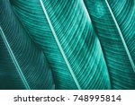 tropical palm leaf texture ... | Shutterstock . vector #748995814