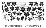 Stock vector set of isolated silhouette lily in styles cute hand drawn flower vector illustration in white 749039911