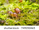 macro close up termites | Shutterstock . vector #749050465
