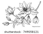 magnolia flower. drawing and... | Shutterstock .eps vector #749058121