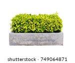 ficus altissima tree in... | Shutterstock . vector #749064871