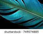 close up blue vintage feather... | Shutterstock . vector #749074885