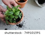 hands of a man planting trees...   Shutterstock . vector #749101591