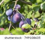 sunny full frame scenery with... | Shutterstock . vector #749108635