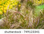 beautiful grass   flower grass  ... | Shutterstock . vector #749123341