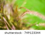 beautiful grass   flower grass  ... | Shutterstock . vector #749123344