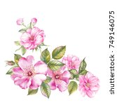 bouquet of spring flowers.... | Shutterstock . vector #749146075