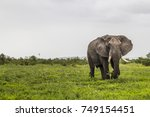 elephant | Shutterstock . vector #749154451