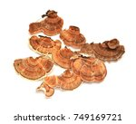 Small photo of trametes versicolor mushroom, commonly the turkey tail