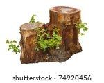 Tree Stump And Green Leaf...