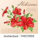 vector colorful hibiscus...   Shutterstock .eps vector #749273905
