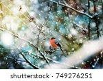 Bird Bullfinch On A Tree Branc...