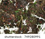 red berries at snow | Shutterstock . vector #749280991