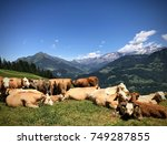 Small photo of Alpine cows