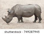 southern white rhinoceros ...   Shutterstock . vector #749287945