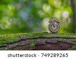 vintage alarm clock in the... | Shutterstock . vector #749289265