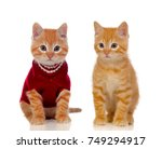 two beautiful red cats  one...   Shutterstock . vector #749294917