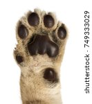 Close Up Of Lion Cub's Pad  4...