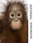 Close Up Of Young Bornean...