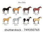 Horse Color Chart Set.  Equine...