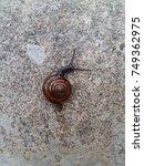 Small photo of Snail