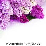 Lilac Spring Flower Border...