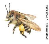 closeup european honey bee ... | Shutterstock . vector #749365351