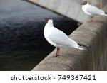 A Beautiful White Seagull...