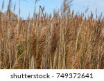uncultivated agriculture field... | Shutterstock . vector #749372641