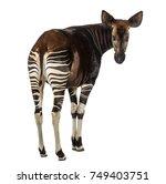 Rear View Of An Okapi  Looking...