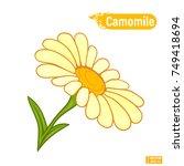 bloomed chamomile flower | Shutterstock .eps vector #749418694