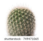 cactus plant isolated on white... | Shutterstock . vector #749471065