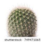 Cactus Plant Isolated On White...