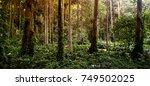 tropical rain forest in brazil | Shutterstock . vector #749502025