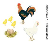 Vector Of Rooster Hen Chicken...