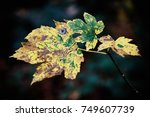 autumn maple leaves | Shutterstock . vector #749607739