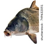 side head fish big carp... | Shutterstock . vector #749632051