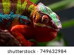 close up animal portrait photo... | Shutterstock . vector #749632984