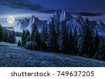 spruce forest on grassy... | Shutterstock . vector #749637205