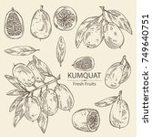 collection of kumquat  whole... | Shutterstock .eps vector #749640751