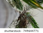 tree trunk and leaf of... | Shutterstock . vector #749644771