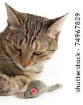 Stock photo portrait of grey cat with toy mouse 74967829