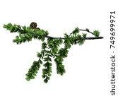 larch branch sketch vector... | Shutterstock .eps vector #749699971