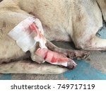 close up injured hind legs of a ... | Shutterstock . vector #749717119