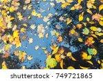 Wet Leaves On Ground   Autumn...