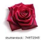 Stock vector red rose vector 74972545
