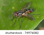 the world of diptera.mintho... | Shutterstock . vector #74976082