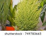 window plants. flowers stand... | Shutterstock . vector #749783665