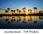 Sunrise Landscape With Sugar...